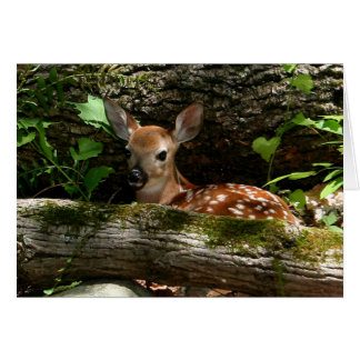 [Forest Fawn] - Any Occasion Card
