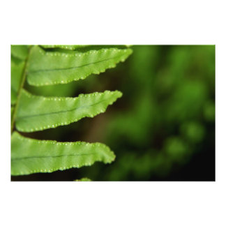 Forest Fern Photo Print