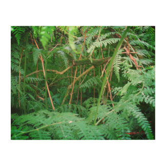 Forest Ferns in Sherwood Wooden Panel
