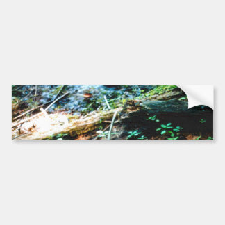 Forest Floor Bumper Stickers