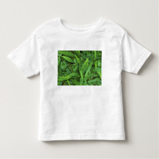 Forest Floor, Quinault Rain Forest, Olympic NP, T Shirts