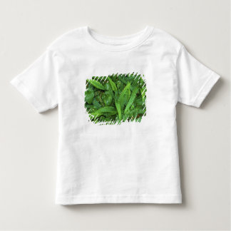 Forest Floor, Quinault Rain Forest, Olympic NP, Tee Shirts