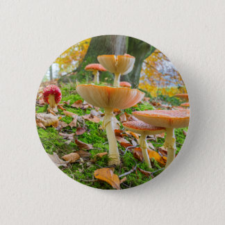 Forest floor with fly agarics and leaves in fall 6 cm round badge