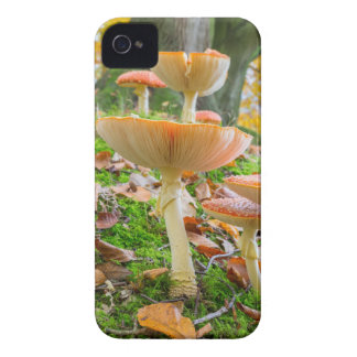 Forest floor with fly agarics and leaves in fall iPhone 4 cases
