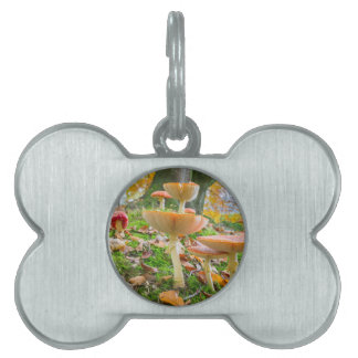 Forest floor with fly agarics and leaves in fall pet name tag
