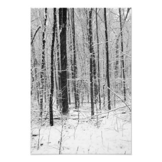 Forest in Snow Storm BW Photo Print