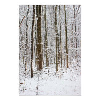 Forest in Snow Storm Photo Print