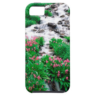 Forest Indian Peaks Wilderness Roosevelt iPhone 5 Covers