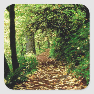 Forest Maple Lined Silver Trail Silver Falls Square Sticker