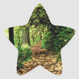 Forest Maple Lined Silver Trail Silver Falls Star Sticker
