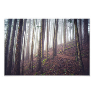 Forest Mist | Photo Print