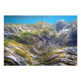 Forest of Neptune's grass at underwater Cyprus Photograph