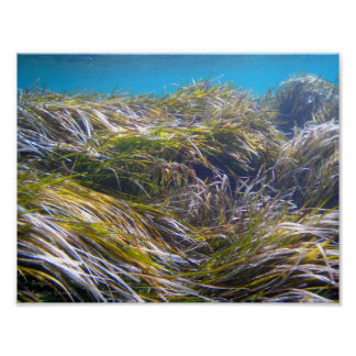 Forest of Neptune's grass at underwater Cyprus Poster