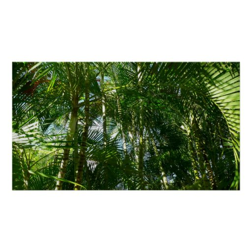 Forest of Palm Trees Print