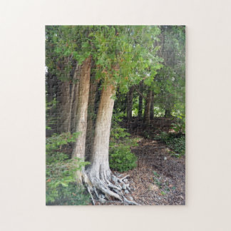 Forest Path 586 Jigsaw Puzzle