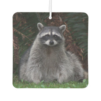 Forest Raccoon Photo Car Air Freshener