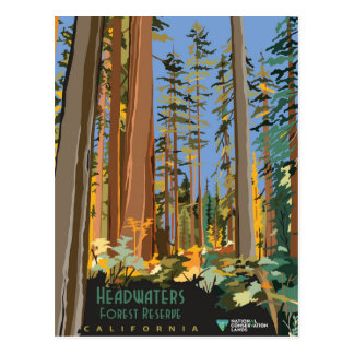 Forest Reserve Postcard