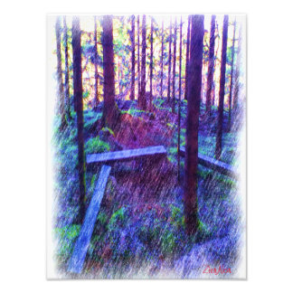Forest Resting place Art Photo