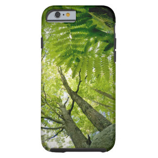 Forest scene in Acadia National Park, Maine. Tough iPhone 6 Case