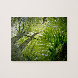 Forest scene in Acadia National Park, Maine. Puzzle