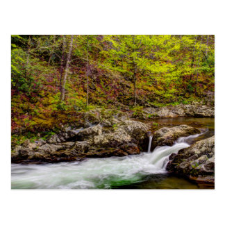 Forest Stream In Great Smoky Mountains Postcard