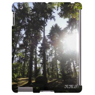 Forest & Sun