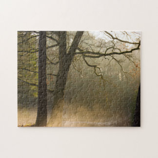 Forest sun rays and low fog jigsaw puzzle