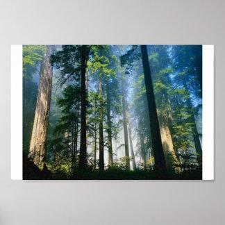 Forest Sunlight Poster