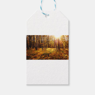 Forest Sunset in the fall Maple Bush Gift Tags