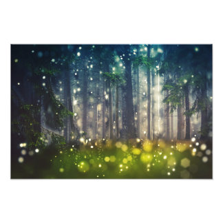 Forest, trees on clearing, dawn photo print