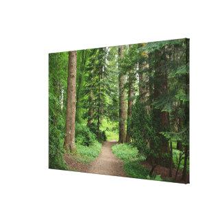 Forest walk, highlands, Scotland Canvas Print