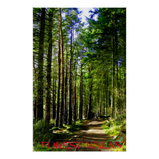 Forest Walks Poster