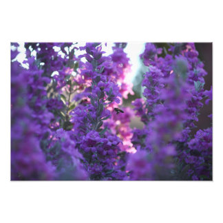 Forests of Amethyst Photograph