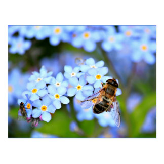 Forget-Me-Not Flowers with Hoverfly Postcard