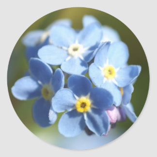 Forget Me Not s Cluster Round Sticker