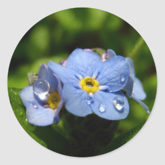 Forget-me-not Stickers