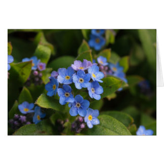 forget-me-not with dew macro greeting cards