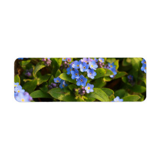forget-me-not with dew return address label
