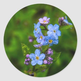 Forget-me-nots in the Rain Classic Round Sticker