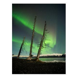Forgotten Spruce Aurora Postcard