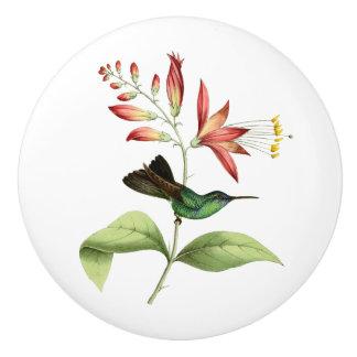 Fork Tailed Wood Nymph Hummingbird Ceramic Knob