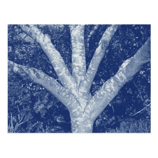 Forked Branches - Cyanotype Effect Postcard
