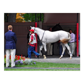 Form Fitting Filly by Tapit Post Card