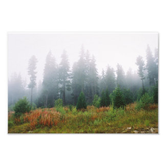 Forrest morning , Kodak Professional P Photo Print