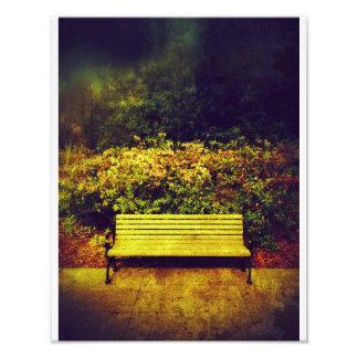 Forsyth Park Bench Photo Art