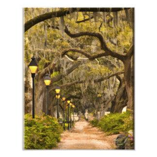 Forsyth Park - Photo, Savannah, Georgia (GA) USA Photo Art