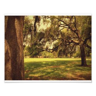 Forsyth Park Trees Art Photo
