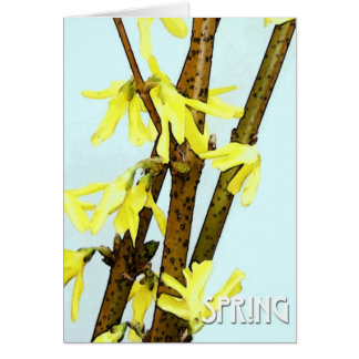 Forsythia Spring Greeting Card