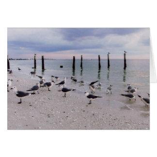 Fort Myers Beach birds Card