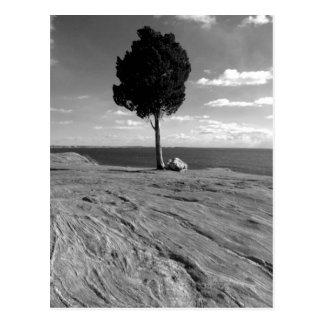 Fort Phoenix Tree Postcard